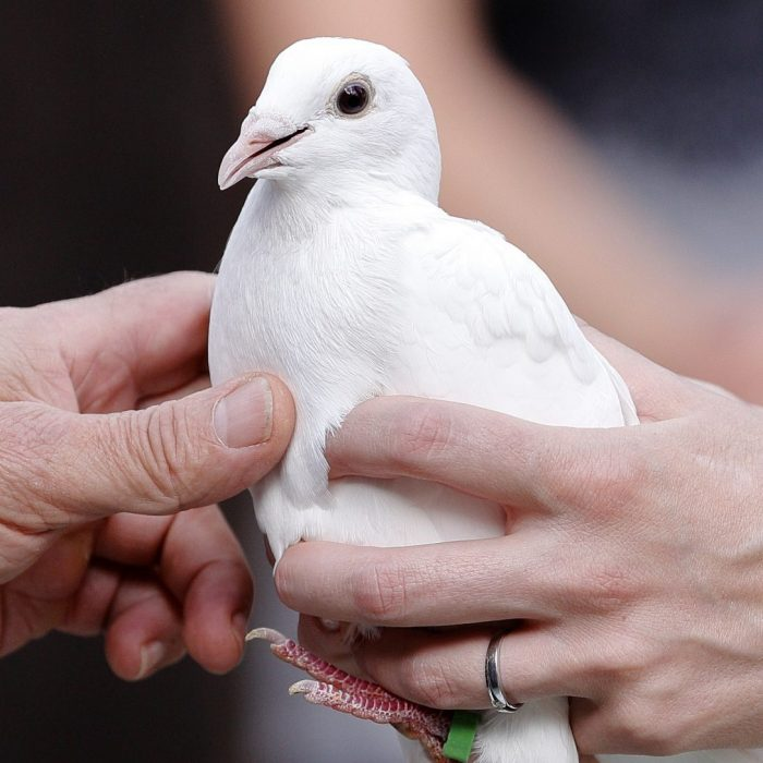 Hochzeitsfoto, FOWATO, Walter Zarbl, weiße Taube