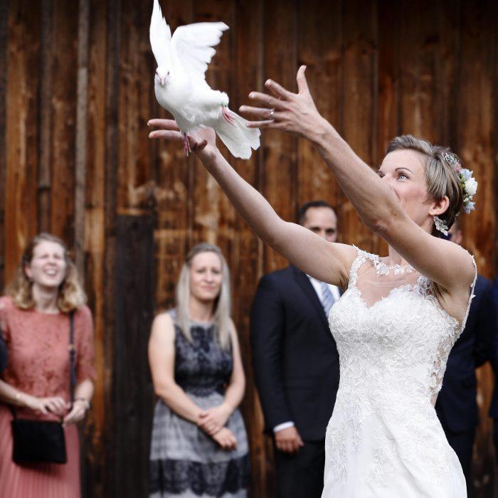 Hochzeitsfoto, weiße Taube